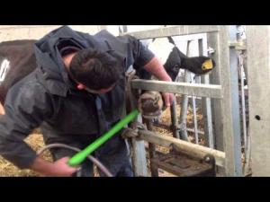 Embedded thumbnail for Farm Animal Promotional Video