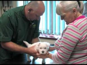 Embedded thumbnail for Puppy Health Check