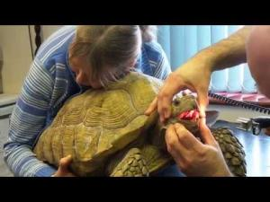 Embedded thumbnail for Small Animal Promotional Video