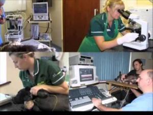 Embedded thumbnail for Cain Veterinary Centre, Llansantffraid
